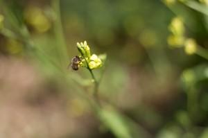 bees at taino farms