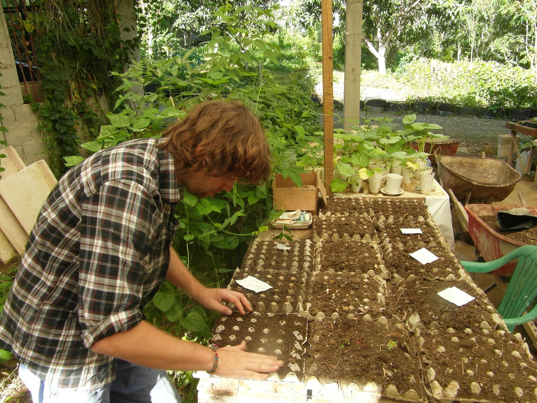 Planting Cow Pea Seeds