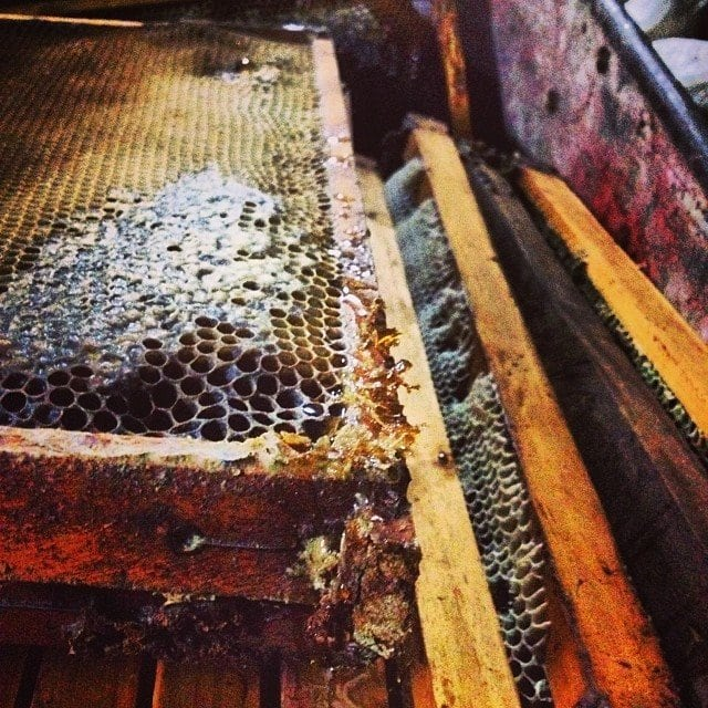 Slides of raw honey comb collected from our ten hives at Taino Organic Farm.