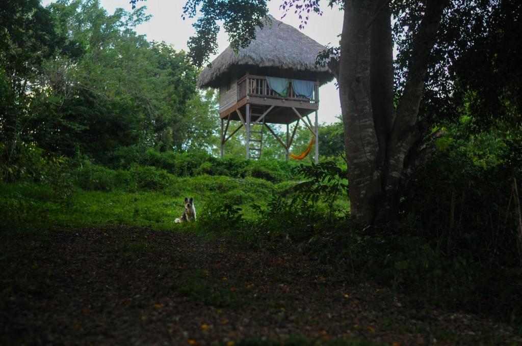 Stilted eco-hut at Taino Farm