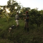 Food Forest. An example of Agro forestry