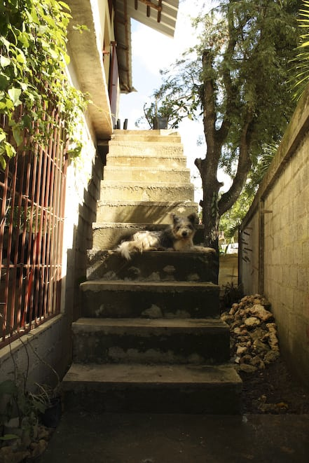 Piggy and the steps up to the Kitchen