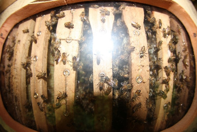 Charlie-Durrant-Permaculture-Bee-keepin-apiculture-dominican-republic-taino-farm-38051