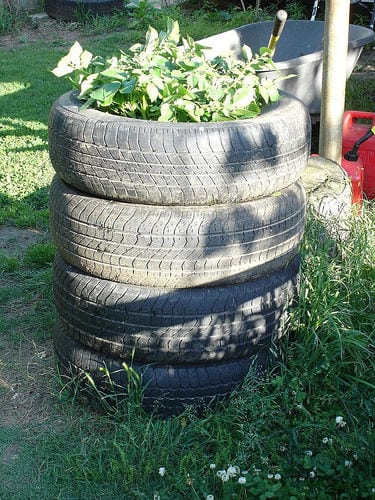 tire tower for planting potatoes