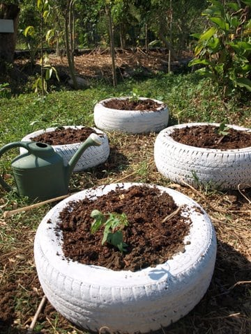 recycling tires for growing potatoes