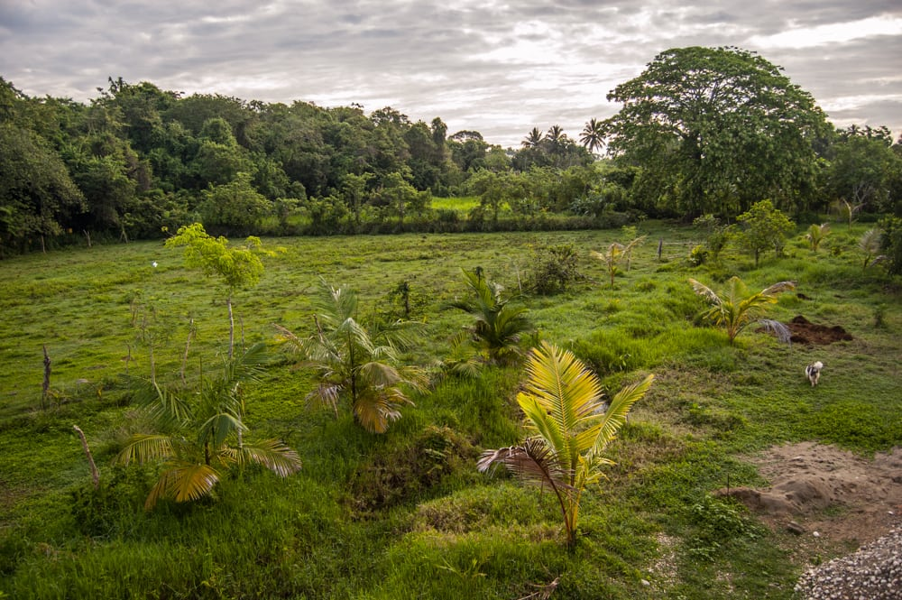 Taino Farm Cow Paddock and food forest