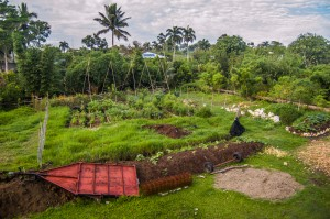 annual permaculture beds