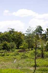 Tropical permaculture orchard
