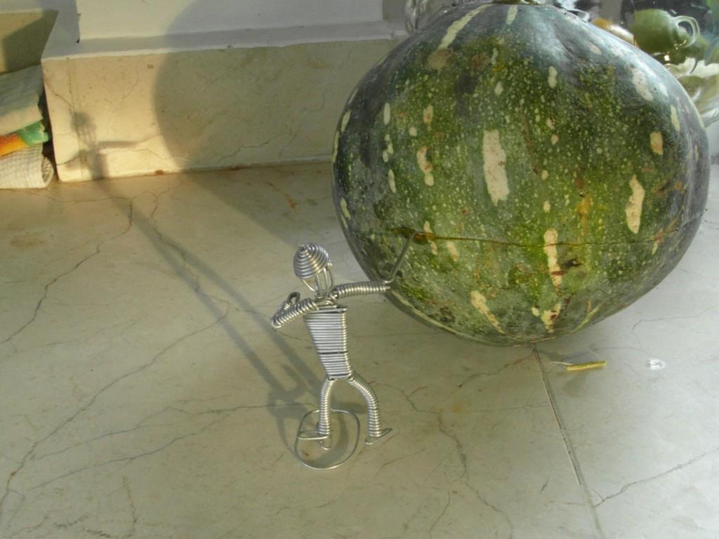 Auyama pumpkin