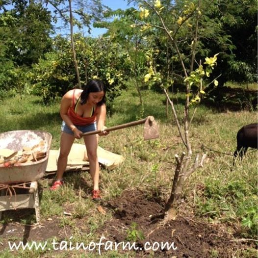 Clearing the bases of the trees so they can grow!
