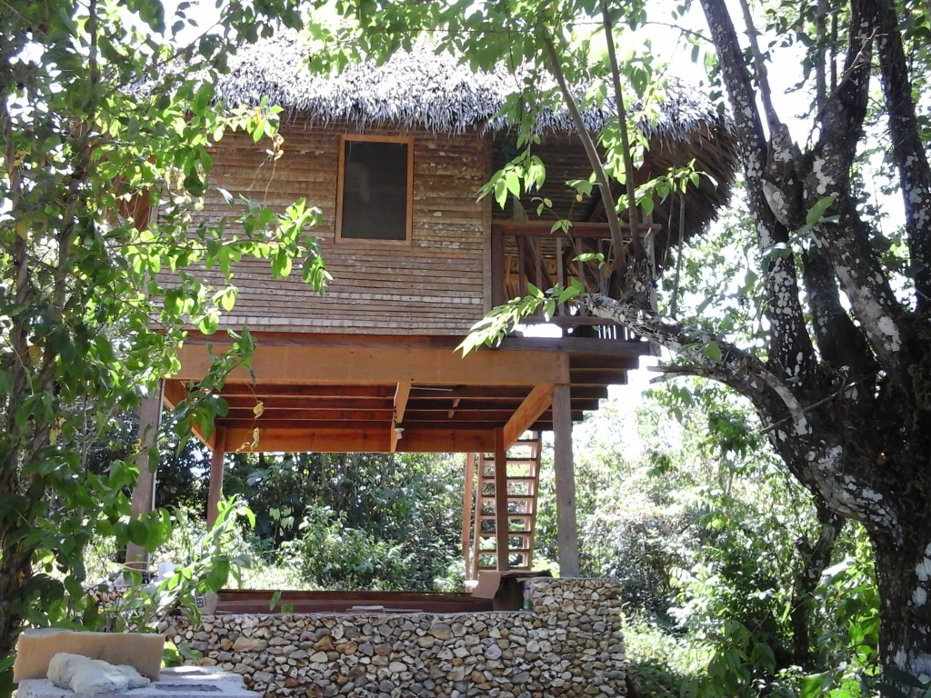 One of the cabañas in the trees at Taino Organic Farm