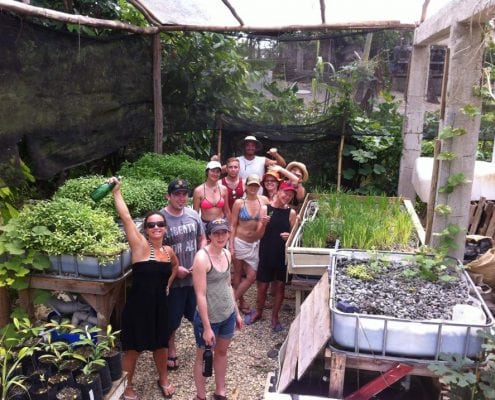 The Aquapoincs Nursury Internship Sustainable Living At Taino Farm