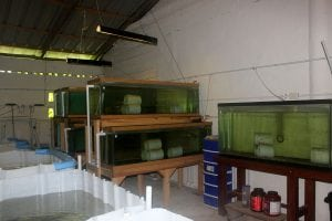 The breeding room at taino organic farms showing IBC and glass tanks