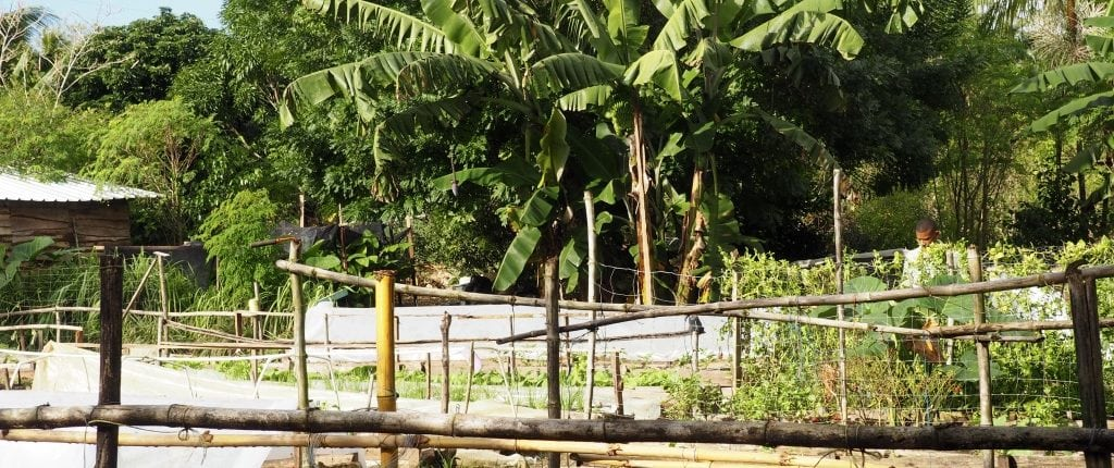 Taino Farm Sustainable Farming and Aquaponics in the Dominican Republic