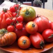 distintas variedades naturales y cultivares de tomate