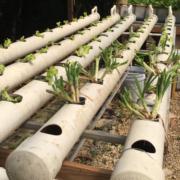 New NFT hydroponics system in Taino Farm